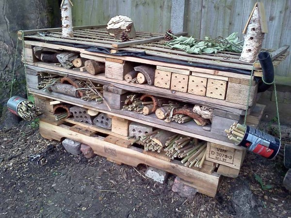 The five star bug hotel. Breakfast included!